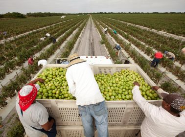 4 Things You Didn't Know About Tomatoes That You Can Learn From the 'Food Chains' Documentary