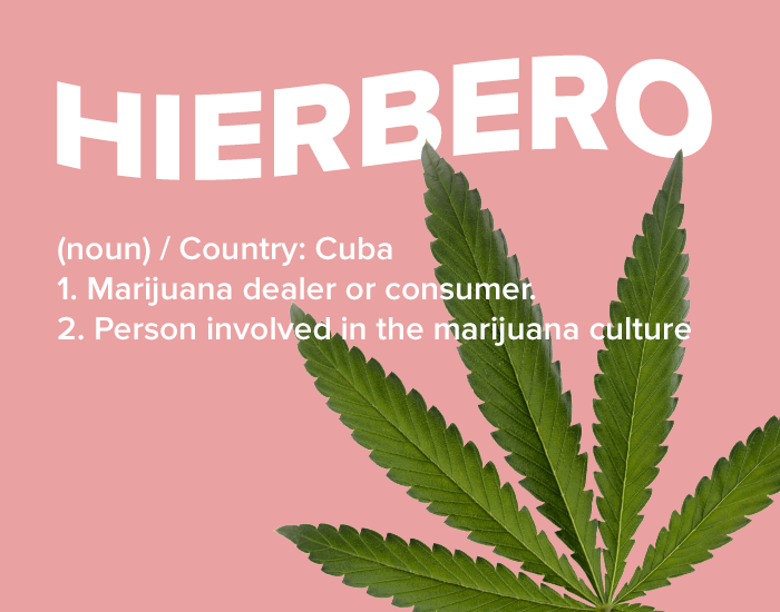 A Guide to Weed Slang in Spanish: 10 Helpful Terms to Know
