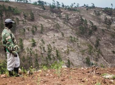 Death Thousand Cuts Nene landscape