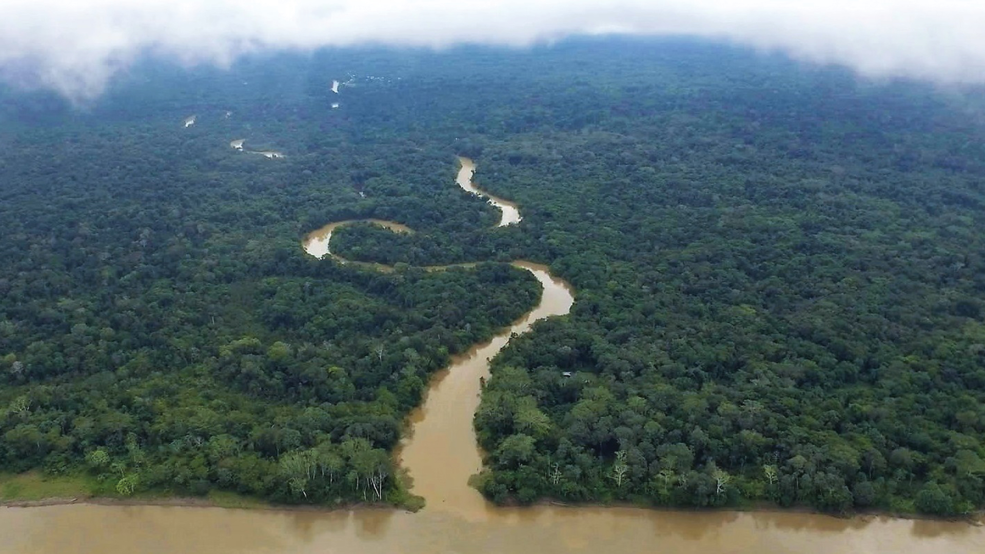 'A River Below' Uncovers the Origins of Explosive Footage of a Dolphin Killing in the Amazon
