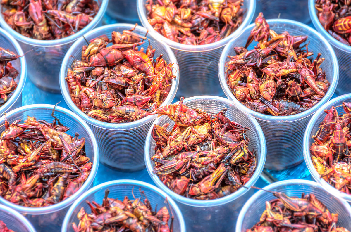 Chapulines are the Hottest-Selling Food Item at the Seattle Mariners' Stadium