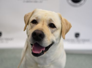 Frida, the Rescue Dog Who Rose to Fame After Mexico Earthquake, Retires