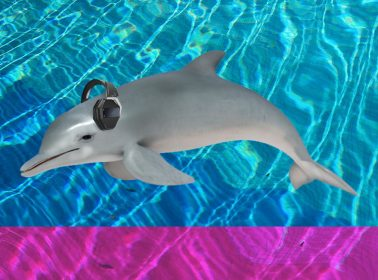 It Turns Out Loud Mexican Fish Orgies Could Deafen Dolphins and Everyone Is Freaking Out