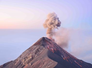 This Dog Is Still Searching For His Family After Guatemala Volcano Explosion