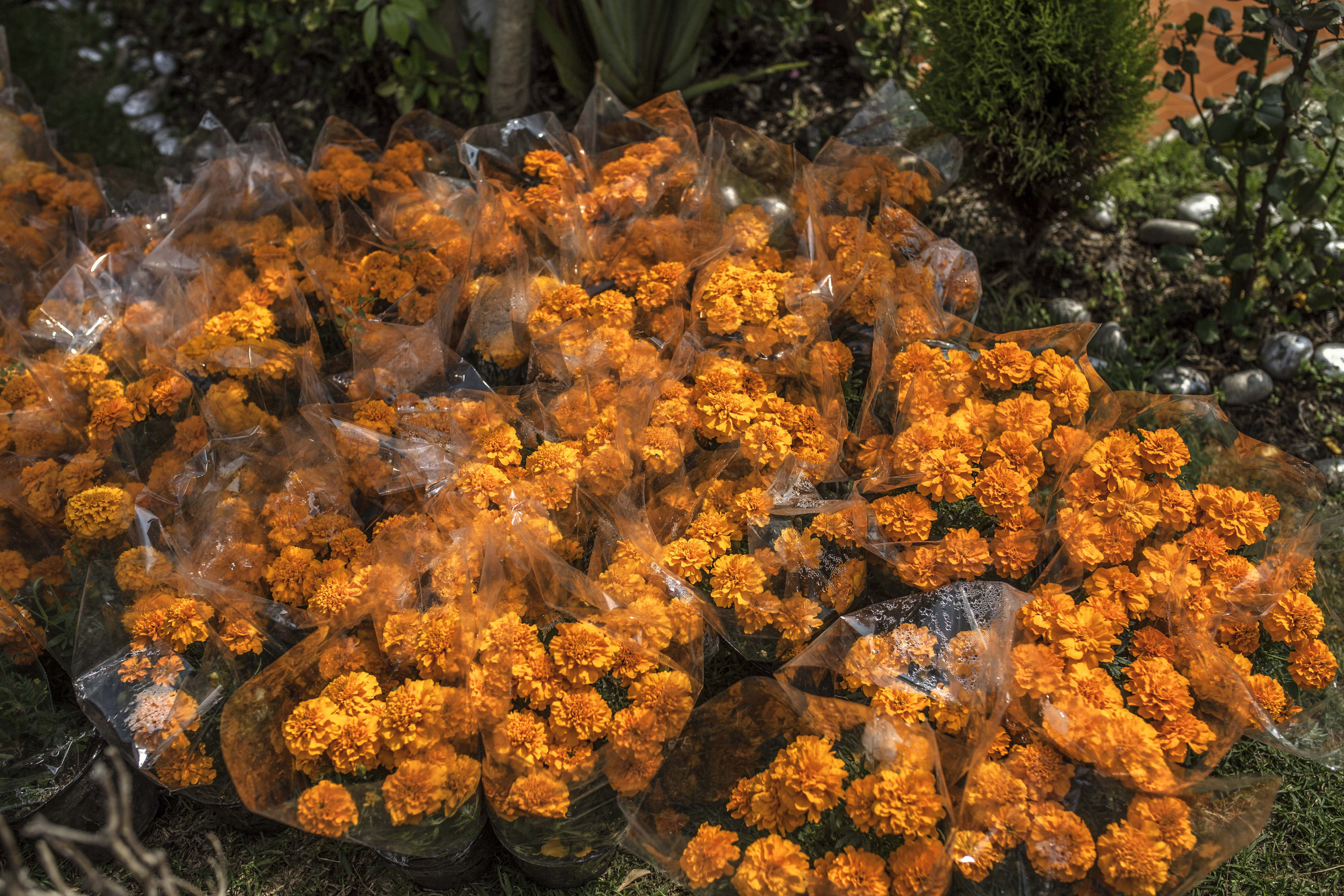 How Marigolds Became the Iconic Flower Used to Celebrate Dia de Muertos