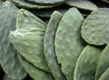 Mexican Scientist Sandra Pascoe Is Working to Create Biodegradable Plastic Bags Out of Nopales