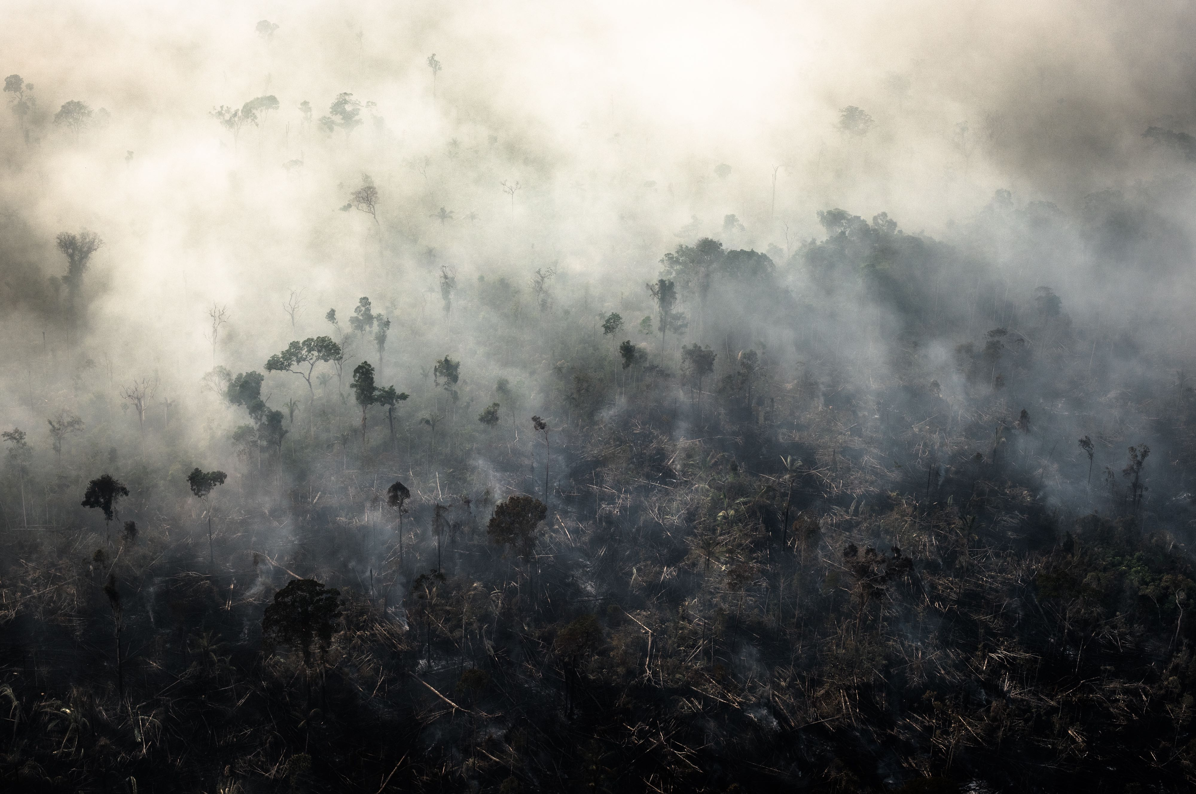 Brazil's Amazon Deforestation Spikes to Highest Level in More Than a Decade