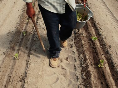 This Bill Could Create a Pathway to Citizenship for Thousands of Undocumented Farmworkers