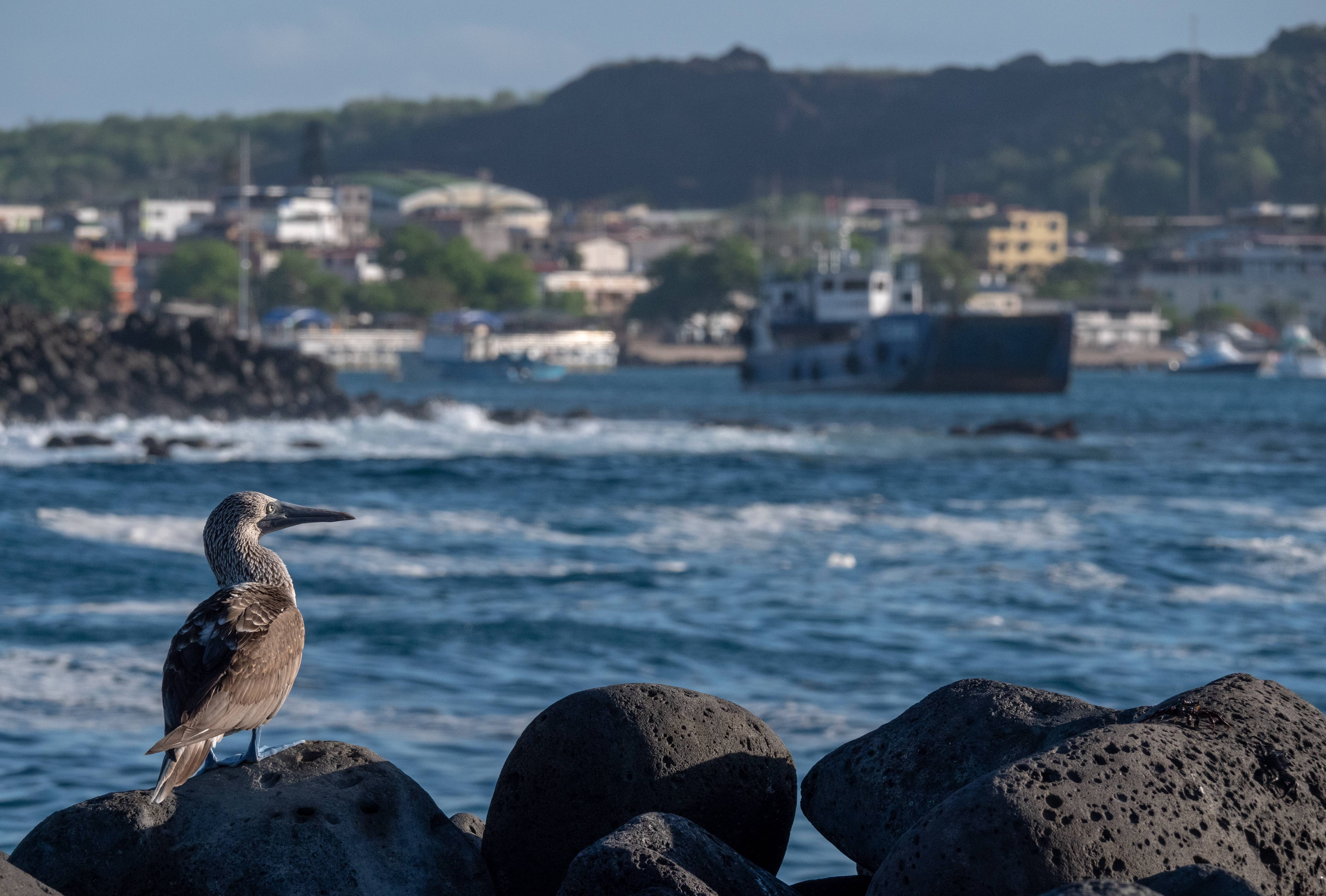 Activists Fear Species Exclusive to Ecuador's Galápagos Islands at Risk After 600-Gallon Oil Spill