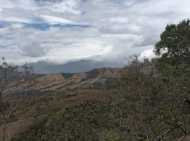 Central American Countries Are Teaming up to Save Their Forests