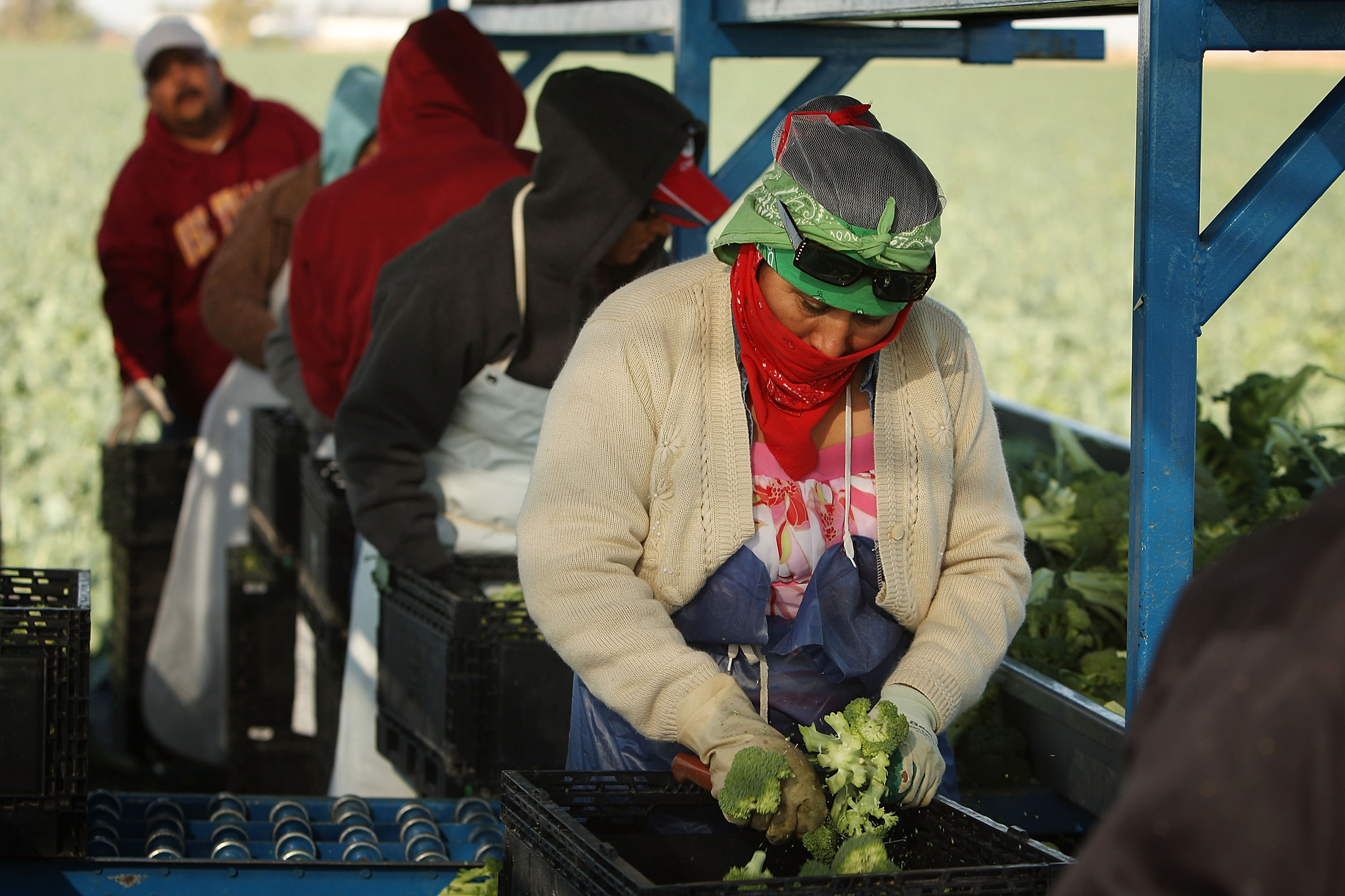 Latinos Feeding the Nation During the Pandemic Are Being Left Behind