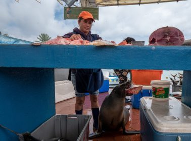 Ecuador's Galapagos Islands Fight to Survive & Adapt in the Time of Coronavirus